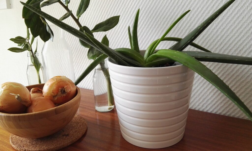 Top 10 Highly-Acclaimed Houseplants